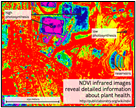 A picture of scan using NDVI.